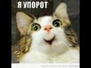 Фильм КОШАК РЫГАЕТ УПОРОТЫЙ КОТ
