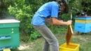 Ржачное видео Пчелы покусали пчеловода