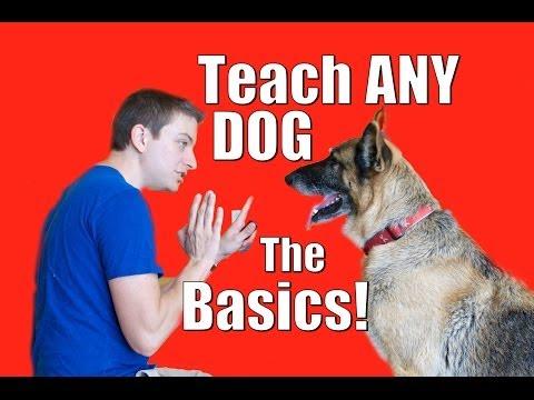 Dog Training 101 How to Train ANY DOG the Basics