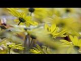 Цветение разнотравие