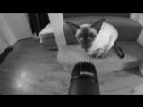 Drum'n'bass с помощью кота