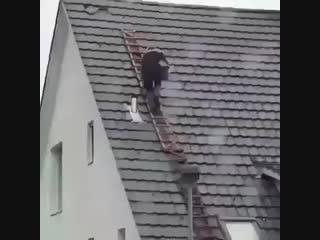 Аварии на стройке. Улетели с лестницы. Выбирайте только профессионалов в строите