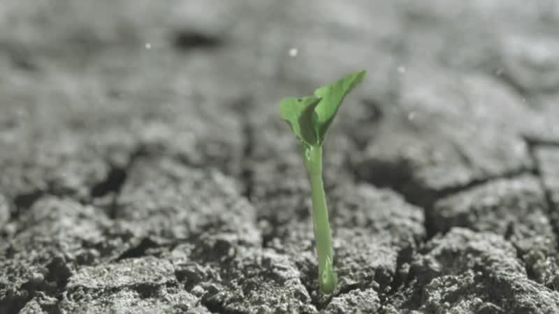 Моршинська 2014 Природне оновлення із заповідних моршиньских джерел
