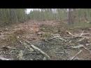 ОПГ Дровосеки. Часть 2. Новый скандал. Югорск 2 вырубка леса