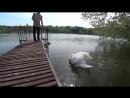 [Трепанация] ВЛОГ: Обнаглевший лебедь). Шашлык в тандыре. Теплый пол. / Весна на даче