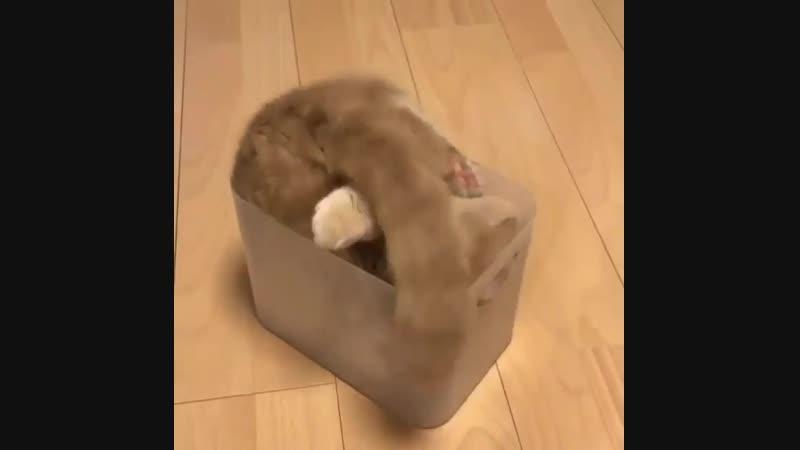Доказательство того что коты это жидкость