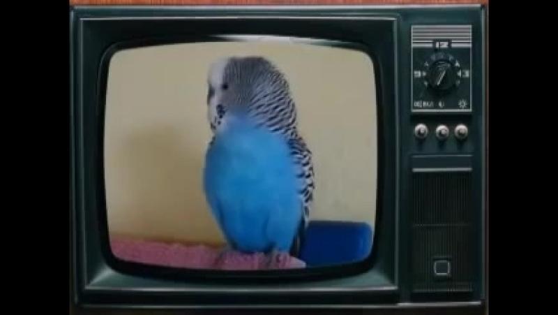 [v-s.mobi]Супер говорящий попугай! Прикольное видео!.mp4
