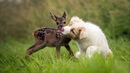 Самые невероятные друзья в животном мире