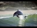 дельфины в Чёрном Море. Крым 2018