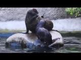 Московский зоопарк показал детеныша морского котика