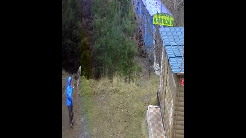 Собаки напали на утку в зоопарке Лимпопо