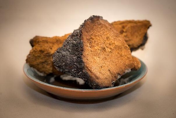 чага - березовый гриб чага-березовый гриб относится к виду «трутовик скошенный». растет гриб на протяжении 1020 лет, прорывая кору, углубляется в ствол, со временем на противоположной стороне