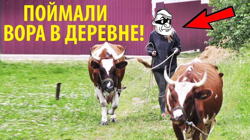 Поймали того кто ворует МОЛОКО! Продали бычка на племя. Убрали сено в ДОЖДЬ!