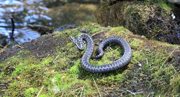 Змеи после зимы выползают при первых лучах солнца