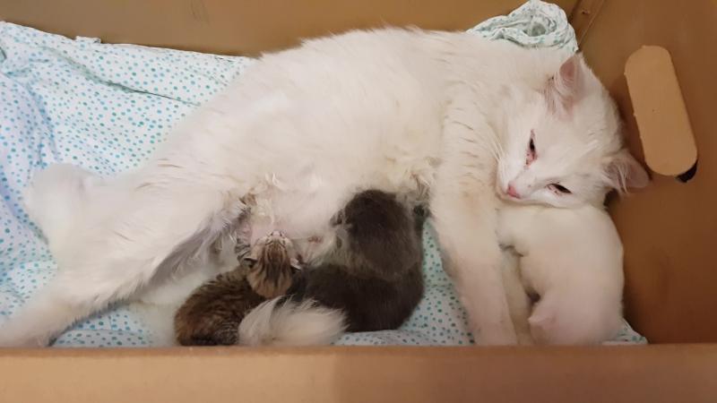 Муся и котята
