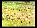 Ritualized warfare in New Guinea