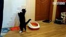 Funny cats Black cats Смешные черные кошки