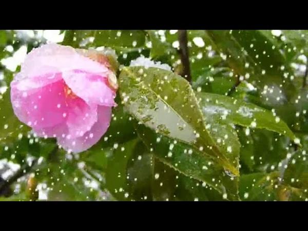 雪が降る Yuki ga Furu Teresa Teng (Deng Li-Jun 鄧麗君)