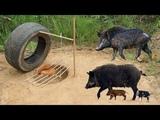 Amazing Quick Wild Pig Trap Using Car Wheel And Deep Hole - How To Make Wild Pig Trap Car Wheel