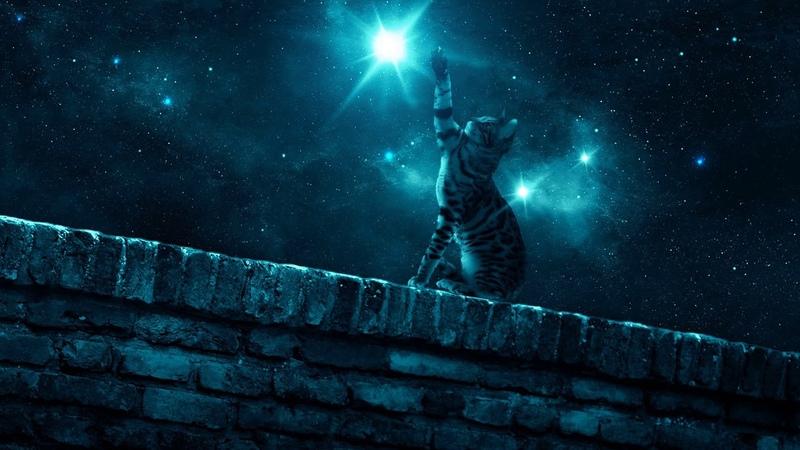 Картинка кошка. Лапка, звезда, звездное небо, ночь, стена | Resim kedi. Pençe, yıldız