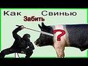 Как правильно забить свинью Жизнь в деревне