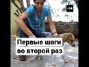 Собаку спасли из сточной канавы