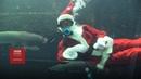 Різдво по-японськи: Санта в акваріумі