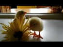 Молодая пара из Москвы купила яйца в магазине