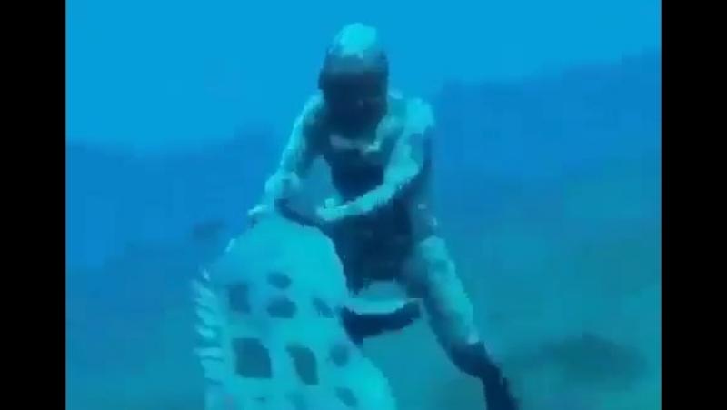 Сказка на ночь, часть 2!😝👀🦈 Ааам💤 ⠀ ⠀ ⠀ фруктыморя море морепродукты рыба доставкарыбы доставкарыбыспб Repost from nat