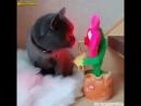 Кот в шоке !