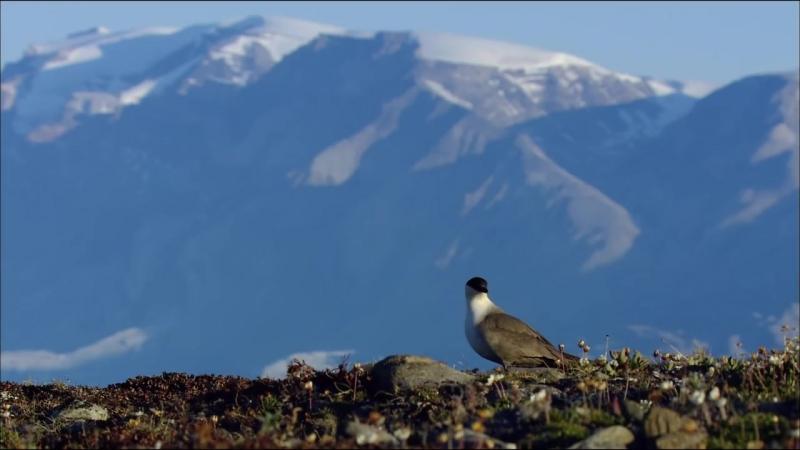 Дикая природа Скандинавии. 6. Гренландия _ Greenland.1080p