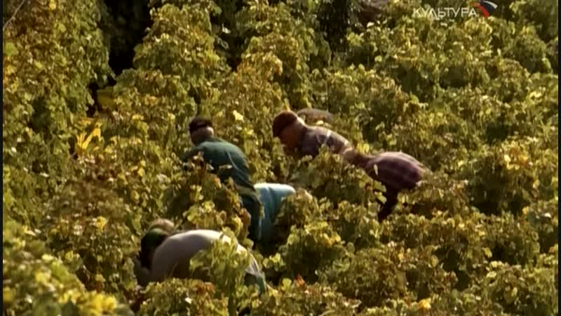 Виноградники Лаво в Швейцарии Дитя Трёх Солнц