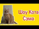 Шоу кота Сэма. Шестой выпуск