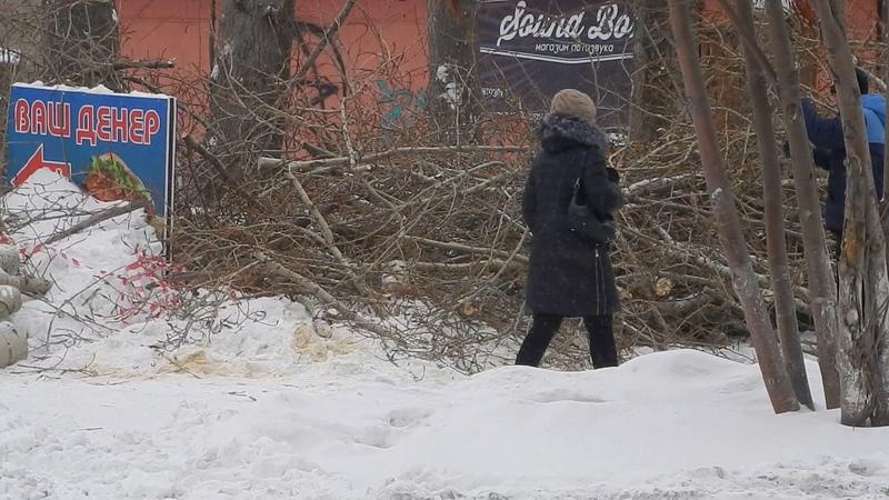 в Ачинске снова обрезали деревья