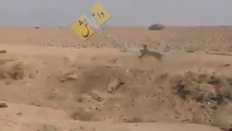 Уничтожение игиловцев, обитающих в норах в пустыне Ирака