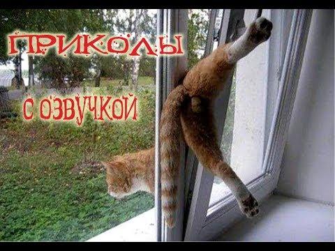 ПРИКОЛЫ 2018 с котами С ОЗВУЧКОЙ от Domi show смешная озвучка КОТОВ