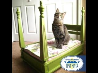 Кровати для котов ТЦ Три Кита
