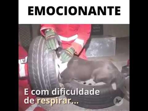 Bombeiros salvam cadelinha presa em roda de carro. AcheiC