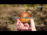 Корсар 4 в луковице