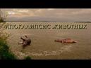Nat Geo Wild Апокалипсис животных 1080р