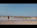 Азовское море и маленький цветочек Василёк