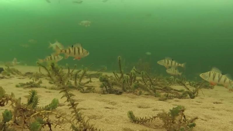Подлёдный мир Усть Илимского водохранилища