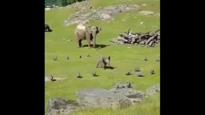 Слонёнок смотреть онлайн без регистрации