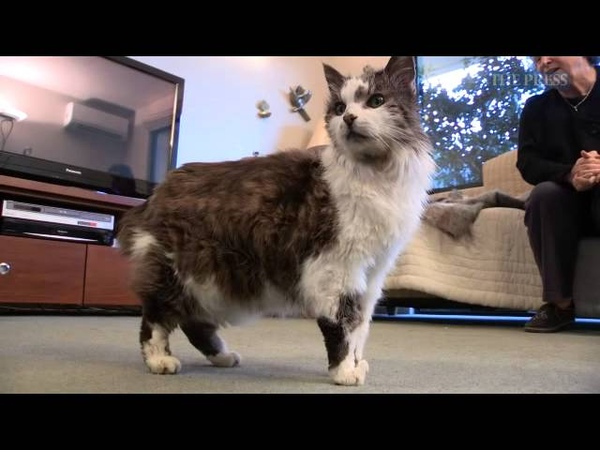 31 Year Old Cat May Be NZs Oldest Stuff co nz