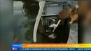 Бесстрашный пес прыгнул в воду чтобы спасти кошку