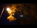 Ночь на Кладбище СТРАШНЫЕ ИСТОРИИ НА НОЧЬ - ДОЛГАЯ НОЧЬ Часть 2 - ТОП СТРАШИЛКИ