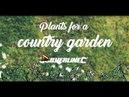 Растения для сада в деревенском стиле переведено ландшафтной студией ДриадаС