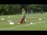 Anouk Rally Obedience Klasse 1