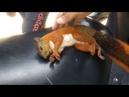 Colombian save squirrel doing indirect heart massage Колумбиец спас белку с помощью непрямого массажа сердца