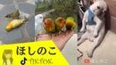 Tik Tok ❤ Những tình huống hài hước của động vật tuyển tập